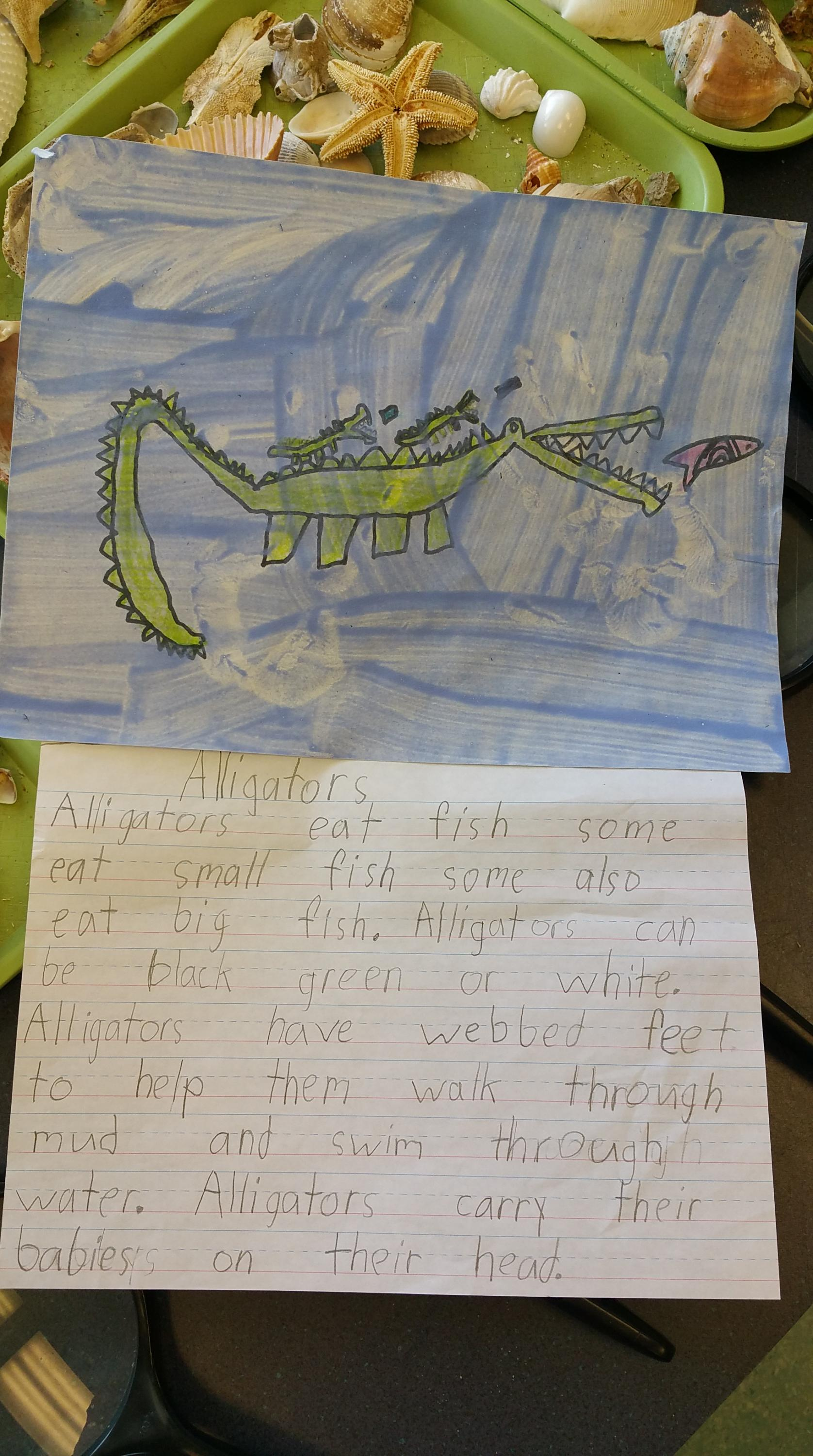 Written reports on the alligator, a native of estuaries.