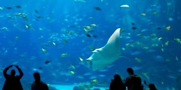 People in an aquarium