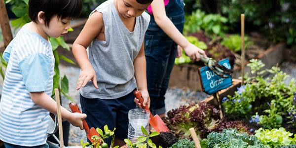 Children gardening in garden plot