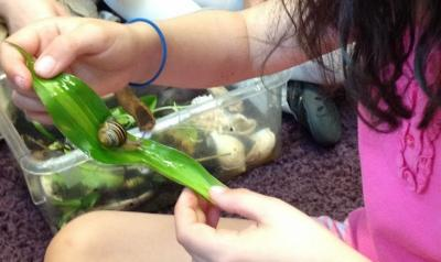 Child experimenting with a leaf to see if it will function as a slide for the snail.