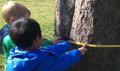 Two children measuring a tree