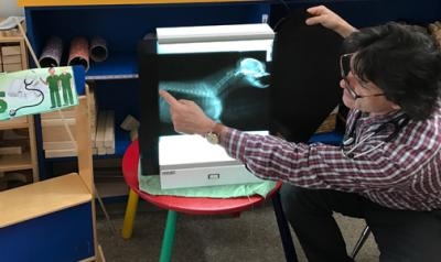 A veterinarian points out animal x-ray