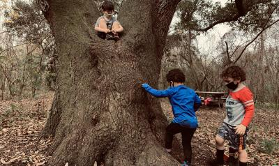 a group of children playing around a tree
