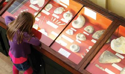 Child looking at a museum fossil display.