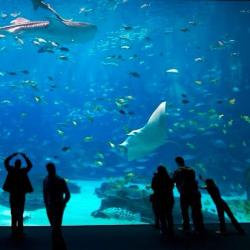 People in an aquarium